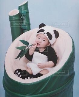 竹から生まれたパンダの写真・画像素材[4734074]