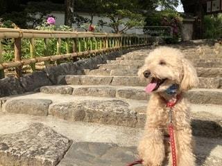 階段で…一休み!の写真・画像素材[1213853]