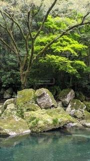 森林と川と苔の写真・画像素材[4735319]
