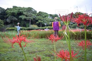花の写真・画像素材[248098]