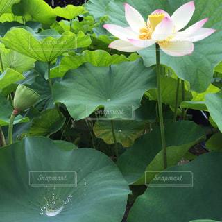 花の写真・画像素材[214382]