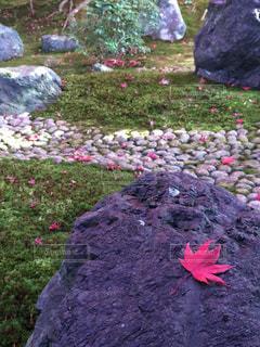 秋,紅葉,京都,赤,葉,季節,観光,旅行,旅,日本,和,シーズン,バックグラウンド,トリップ