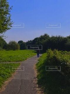 犬,自然,空,屋外,散歩,草,樹木,人物,道,人,パス,パーソン