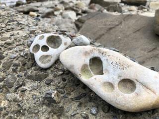 動物,水面,海岸,岩,地面,石