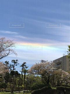 風景,空,屋外,雲,虹,樹木