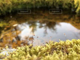 自然,秋,水面,苔,岩,石,草木