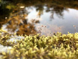 自然,風景,鳥,水面,苔,岩,水溜り,石