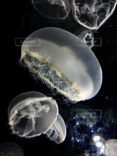 クラゲのクローズアップの写真・画像素材[4746390]