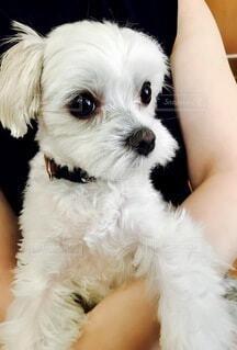 犬を抱く母の写真・画像素材[4751615]