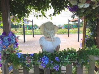 夏の庭の写真・画像素材[4770827]
