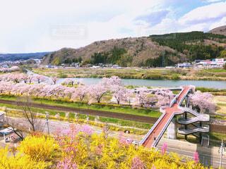 春の色、鮮やかにの写真・画像素材[4773833]