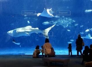 水族館の巨大水槽を眺める親子の写真・画像素材[4774306]