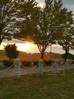 夕日があたる道の写真・画像素材[4839168]