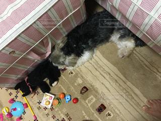 犬 - No.238998