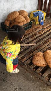 パンの写真・画像素材[362742]