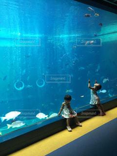 水族館,子供,ツーショット
