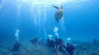 ウミガメとの写真・画像素材[4753911]
