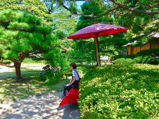 庭園 - No.485564