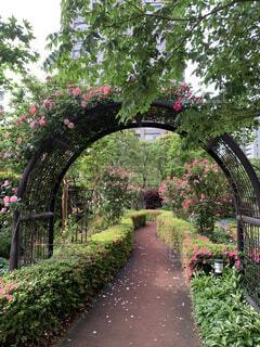 薔薇園のアーチの写真・画像素材[4757574]