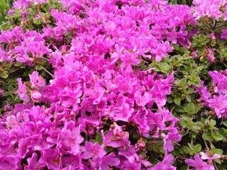 花の写真・画像素材[4766350]