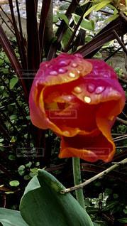 花の写真・画像素材[1971258]
