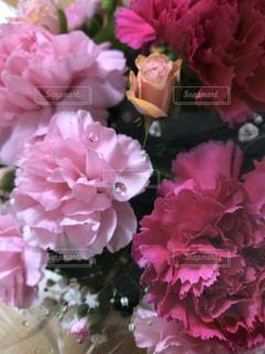カーネーションと薔薇の写真・画像素材[2114480]