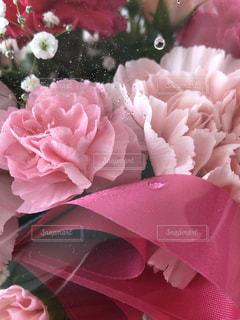 花のクローズアップの写真・画像素材[2116286]
