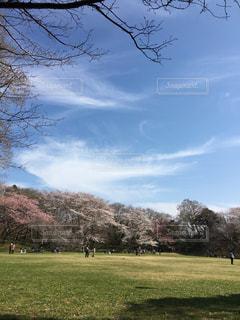 休日の公園の写真・画像素材[2413733]