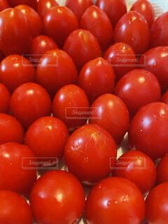たくさんのトマト。の写真・画像素材[4753494]
