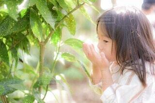 風景,秋,屋外,葉っぱ,少女,人物,人,幼児,人間の顔