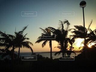 ヤシの木の間から見える夕陽の写真・画像素材[4827984]