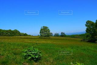 青と緑のバランスが絶妙の写真・画像素材[4869024]