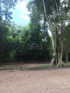 森に願いをの写真・画像素材[791185]