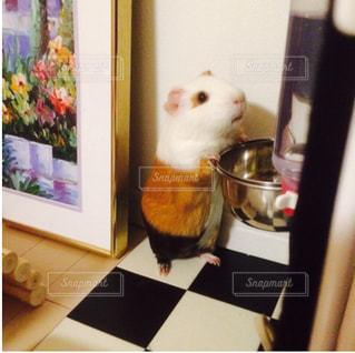 テーブルの上のぬいぐるみの写真・画像素材[738752]