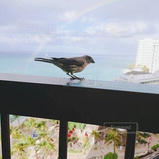 空,動物,鳥,屋外,立つ