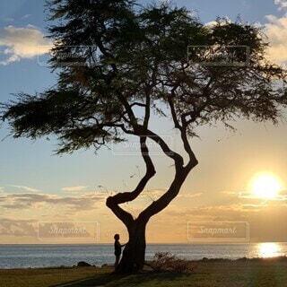 自然,風景,海,空,屋外,太陽,ビーチ,雲,夕暮れ,水面,樹木,草木