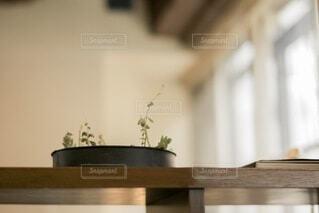 植物のある暮らしの写真・画像素材[4760792]
