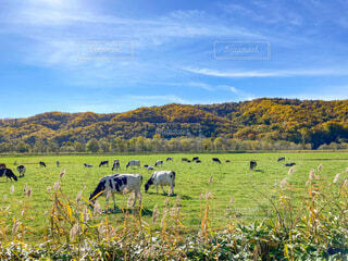 北海道の大自然の写真・画像素材[4760436]