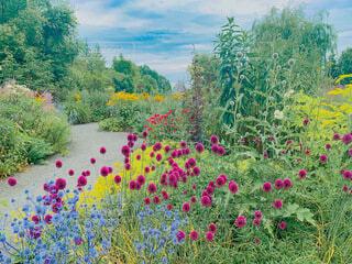 お花畑のクローズアップの写真・画像素材[4760437]