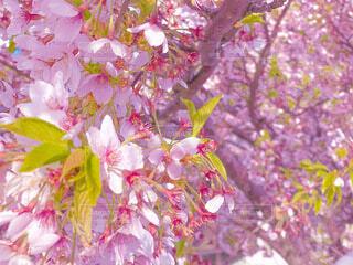 花のクローズアップの写真・画像素材[4760440]