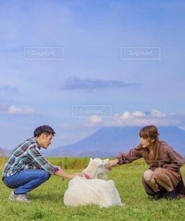 羊蹄山とヤギの写真・画像素材[4857426]