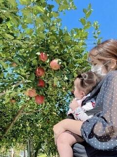 初めてのりんご狩りの写真・画像素材[4857441]