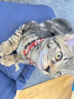 じっと見つめる猫の写真・画像素材[4760556]