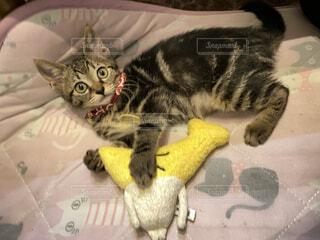 ベッドに横たわる猫の写真・画像素材[4760555]