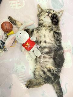 うさぎと猫のバスケの写真・画像素材[4760550]