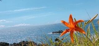 お花と海の写真・画像素材[4760611]