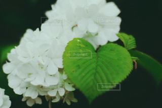 花,夏,庭,緑,白,葉,ハート,可愛い