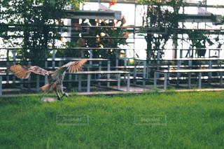 鳥 - No.669375