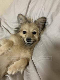 かまってほしい犬の写真・画像素材[4762177]