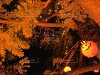 ハロウィンの写真・画像素材[4940415]